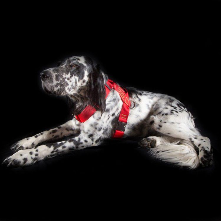 Arnés anti tiro para perros medianos y grandes Bubs
