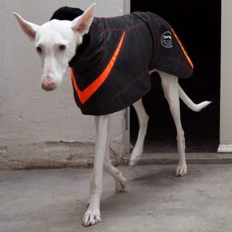 Abrigo impermeable Basic para galgo, podenco y whippet