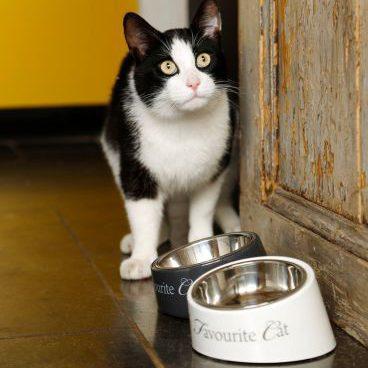 Comedero / bebedero My Favorite Cat para gatos