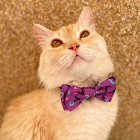 Pajarita Purple para perros y gatos