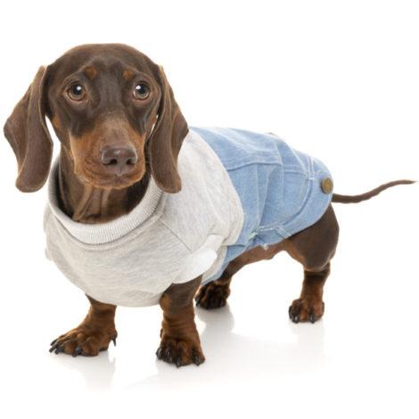 jersey tejano Fuzzyard perros