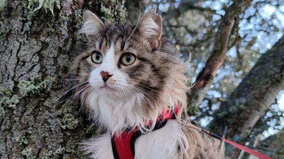 Consejos básicos para disfutar del paseo de tu gato