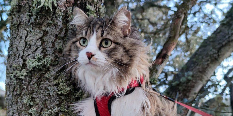 Consejos básicos para disfrutar del paseo de tu gato